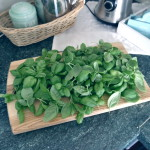 PESTO MAKING IN THE ACTION